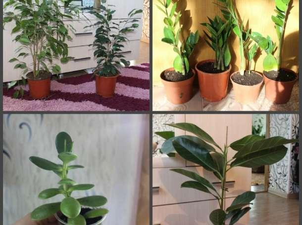 Комнатные растения (разные), фотография 1