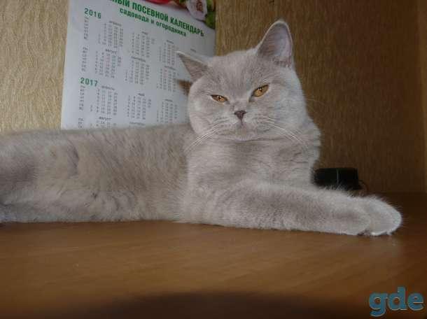 Продажа породистых котят, фотография 3