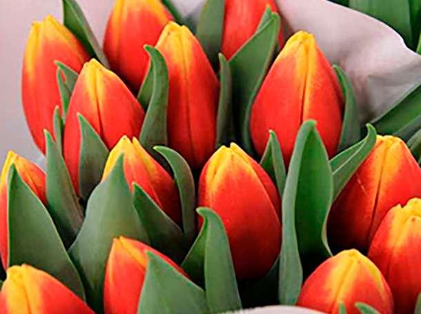 Голландские тюльпаны оптом 2017, фотография 1