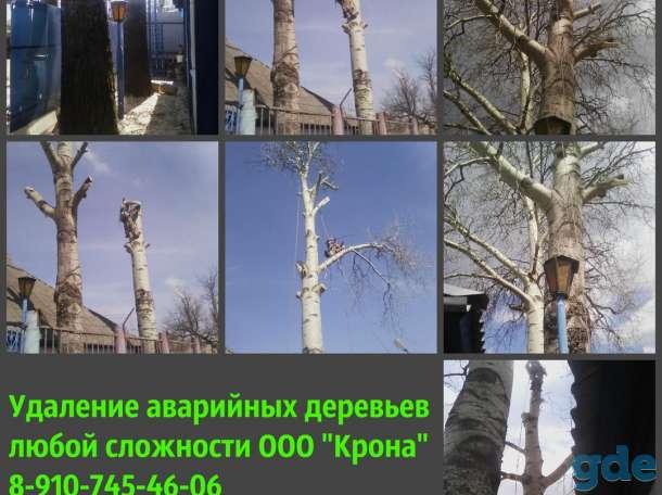 Спил и кронирование аварийных деревьев, фотография 1