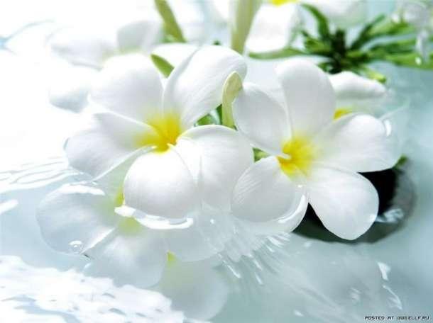 Продавец-кассир цветов, фотография 1