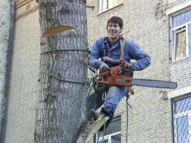 Спилим, обрежем деревья без автовышки, фотография 1