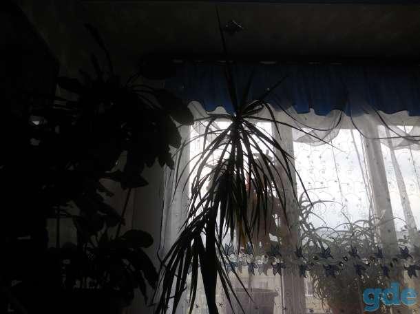 Cдам 3-комн. квартиру С ЕВРОРЕМОНТОМ, Ленина 76а, фотография 12
