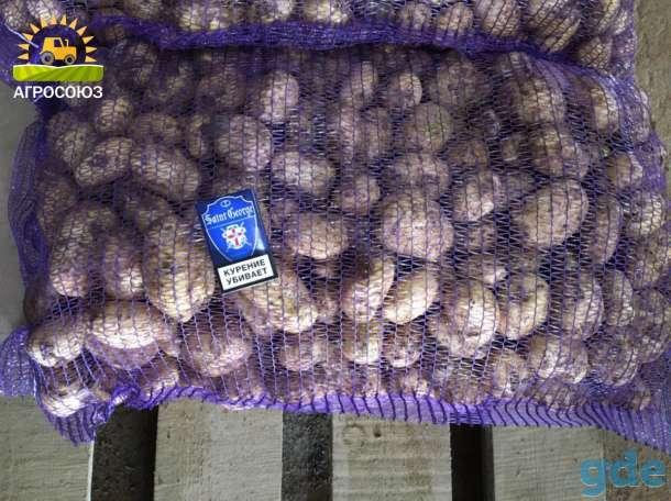 Картофель оптом от 10 тонн от производителя, фотография 3