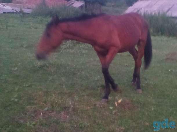 лошадь жеребец, фотография 2