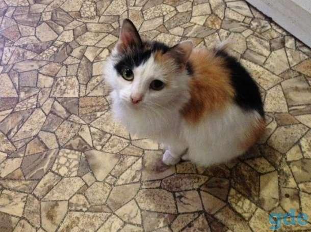 Кошечка, фотография 1