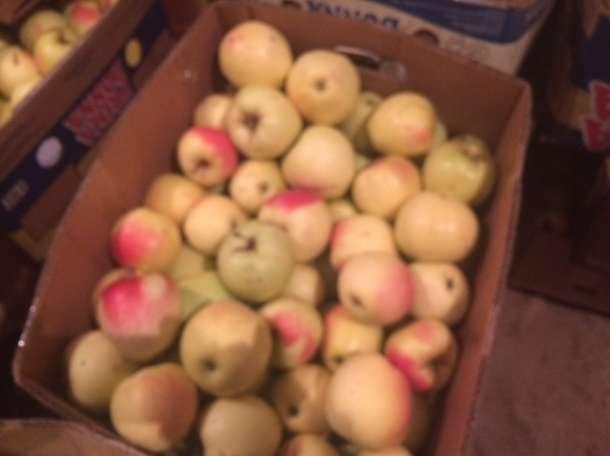 Продаю яблоки зимних сортов (Голден, Семеренко, Антоновка) в  г Нижний Новгород пос Новинки, фотография 5