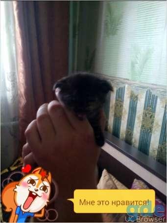 котята в дар, фотография 2