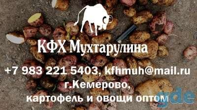 Картофель из Кемерово круглый год, фотография 1